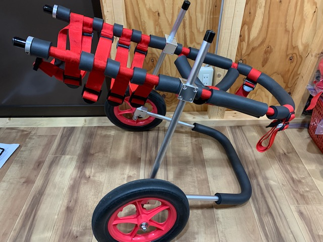 和歌山県のジャーマンシェパード クープちゃんの犬の車椅子