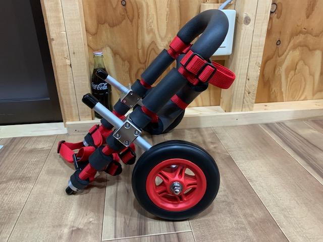 広島県のミニチュアダックスフンド トイちゃんの犬の車椅子