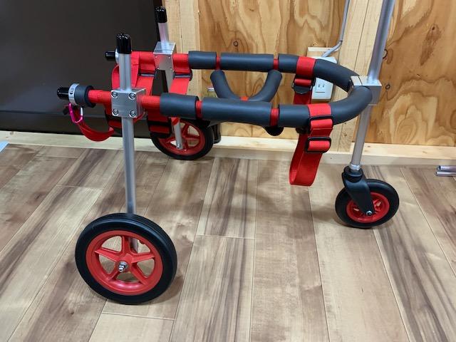 広島県の柴犬 ハリーちゃんの犬の車椅子