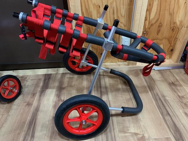神奈川県のアイリッシュセッター ラファエルちゃんの犬の車椅子