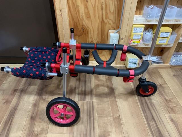 青森県の柴犬 いちちゃんの犬の車椅子
