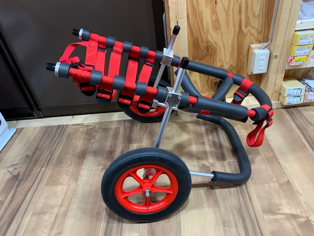 群馬県のフラットコーテッドレトリーバー ナッツちゃんの犬の車椅子